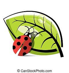 Ladybug Illustration with Leaf Isolated on White Background