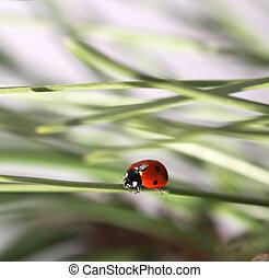 ladybug in green grass