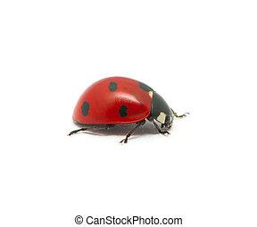 Ladybug isolated on the white