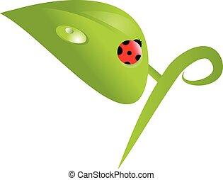 Ladybug, ladybird on green leaf. Vector illustration