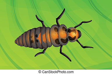 Ladybug life cycle - Illustration of a ladybug life cycle -...