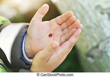 ladybug, ligado, criança, mão.
