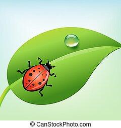 ladybug, ligado, um, folha verde, com, água, drop., vetorial