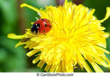 Ladybug - Macro shot of a ladybug rest on a flower