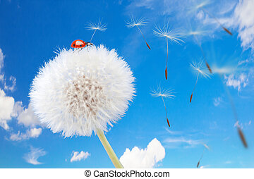 Ladybug on a dandelion on a background of the sky