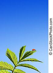 Ladybug on a green leaf over blue sky