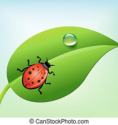 ladybug on a green leaf with water drop. vector