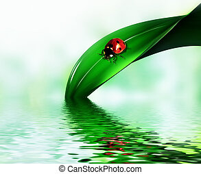 ladybug on a leaf of grass above the water