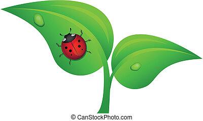 ladybug on a plant vector ilustration