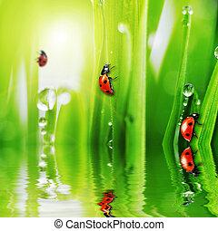 ladybug on fresh green grass