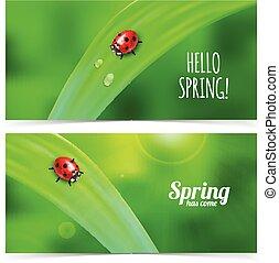 Ladybug on green grass.