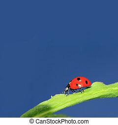 ladybug on green herb under blue sky