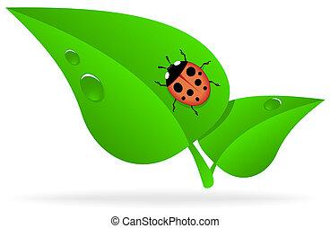 Ladybug on green leaf