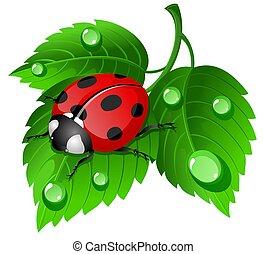 Ladybug on leaf - illustration of ladybug on leaf with...