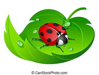 ladybug on leaf isolated on white
