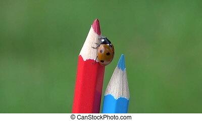 Ladybug on pencils - Ladybird lady-luck crawling on pencils...