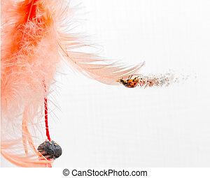 ladybug on pink feather