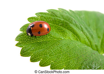 ladybug on the green