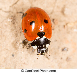ladybug on the ground in nature .
