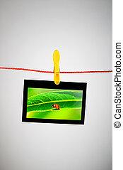 Ladybug on the hanging photo