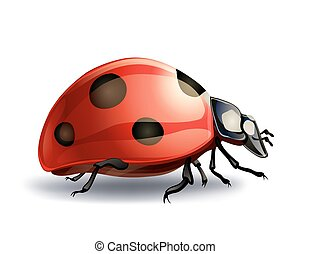 ladybug on white. vector illustration