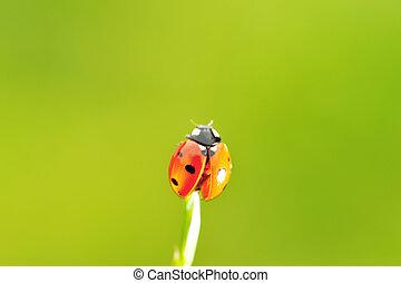 Ladybug ready to fly