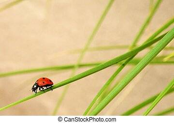 Ladybug sitting on a grass outdoors