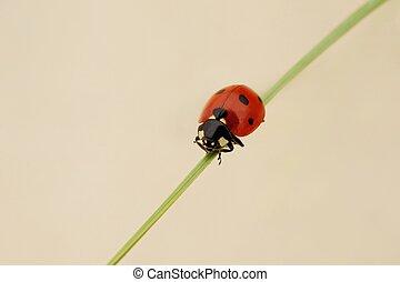 Ladybug sitting on a grass outdoors