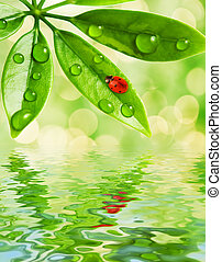 Ladybug sitting on a green leaf reflected in water