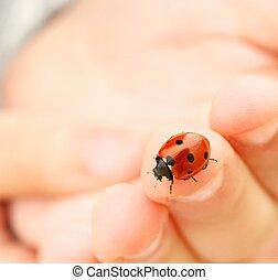 Ladybug sitting on a human finger