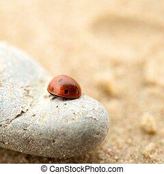 Ladybug sitting on a rock