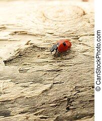 Ladybug sitting on a wood