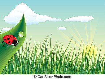 Ladybug -  Ladybug sitting on the grass