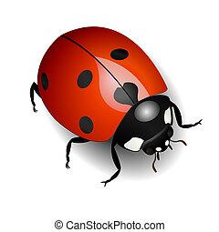Ladybug - Vector illustration of a ladybug over white