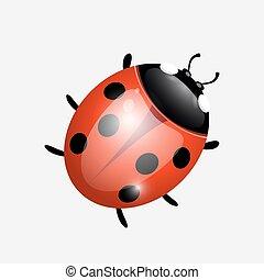 ladybugon a white background