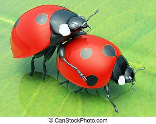 Ladybugs copulate