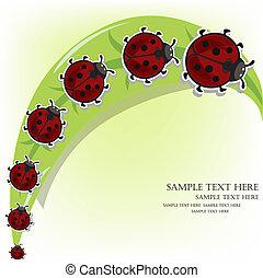 Ladybugs on a grass