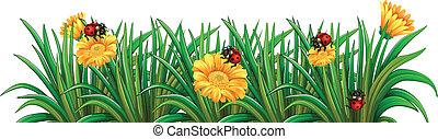 ladybugs, tuin