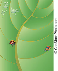 LADYBUGS - Two ladybugs walking on a big tropical leaf with ...