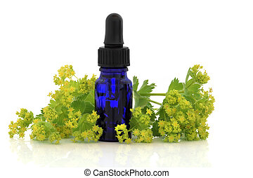 Ladys mantle herb and flowers with aromatherapy essential oil glass bottle, over white background. Alchemilla mollis.