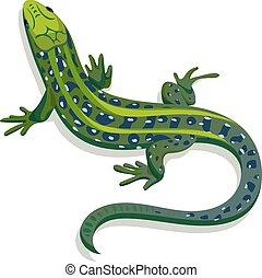 lagarto, ilustración, vector, verde