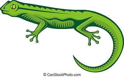 lagarto, verde