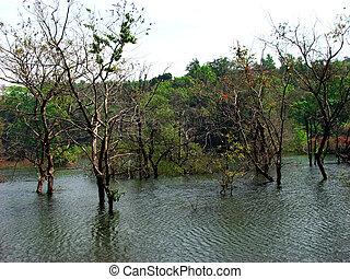 lago, árvores