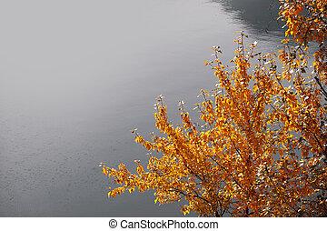lago, albero