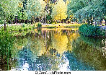 lago azul, y, árbol verde