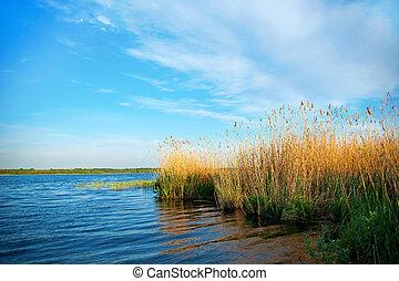 lago, cañas