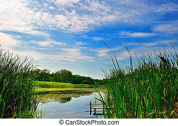 lago, com, canas, sob, azul, céu nublado