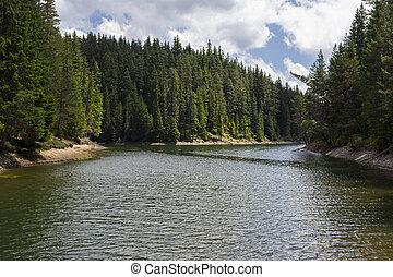 lago, com, pinho, árvores., ventoso