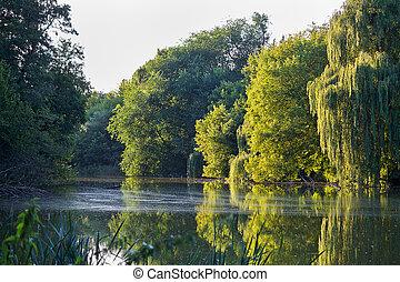 lago, com, salgueiros