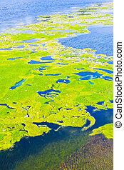 lago, contaminación